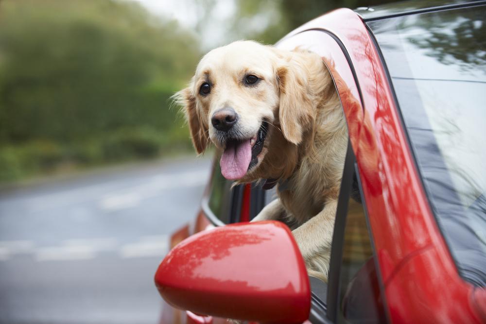 تصویر از ماشین گرفتگی سگ،کنترل و درمان