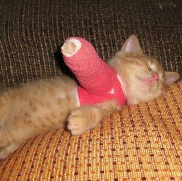 تصویر از درمان شکستگی دست گربه در یزد | درمان شکستگی پای گربه | درمان دررفتگی دست و پای گربه | درمان ضرب دیدگی دست و پای گربه | درمان شکستگی دم گربه | درمان شکستگی لگن گربه