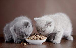 چه غذاهایی برای گربه سمی است ؟