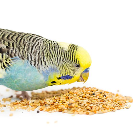 تصویر از بهترین جیره غذای مرغ عشق + ۲ مکمل بسیار مهم