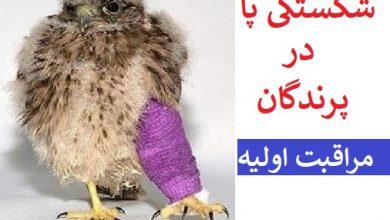 تصویر از درمان شکستگی پای پرندگان در شیراز : مراقبت اولیه تا رسیدن به درمانگاه