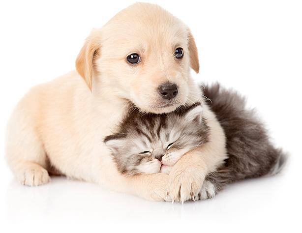 کمپیمنگ حمایت از حیوانات