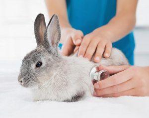 عقیم سازی خرگوش