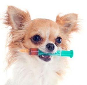 عوارض واکسن سگ – عوارض بعد از واکسن سگ