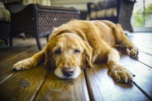 انواع استفراغ در سگ و علت آن