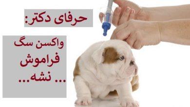 تصویر از مقایسه هزینه واکسن سگ در شیراز تهران اصفهان