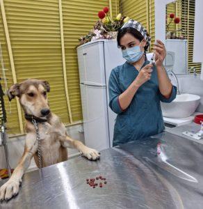 واکسن سگ در شراز