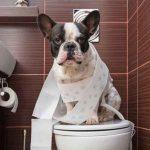 درمان اسهال خونی سگ در خانه