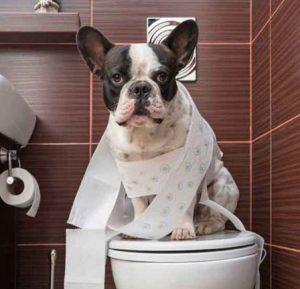 آموزش دستشویی کردن به سگ | آموزش ادرار به سگ
