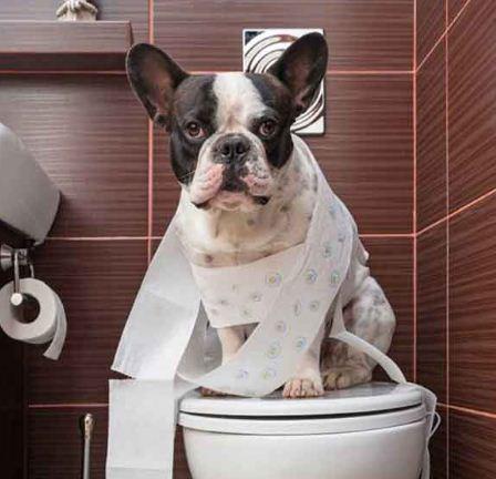 تصویر از آموزش دستشویی کردن به سگ | آموزش ادرار به سگ