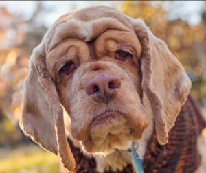 تشخیص سن سگ از روی ظاهر